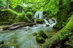 rainforest - The Stone Seer