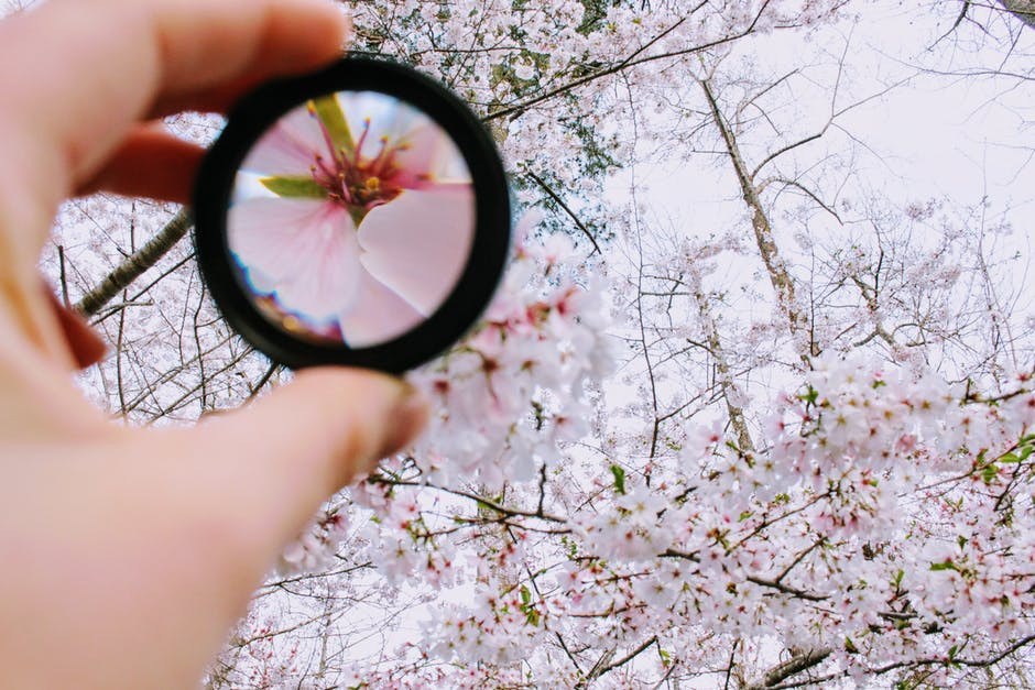 lens focused on a single cherry blossom